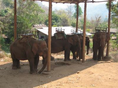 Os elefantes que nos levaram para passear
