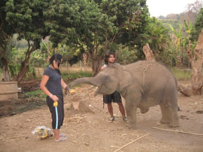 Alimentando o baby elefante