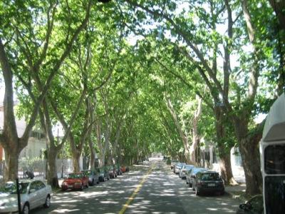 Ruas arborizadas de Montevideo