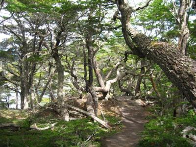 La Senda Costera - o início da trilha é pela floresta