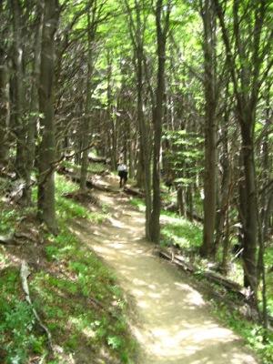 O caminho no meio da floresta