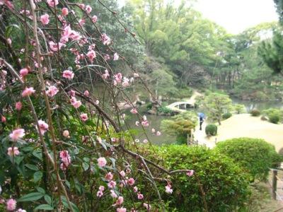Shukkeien Gardens