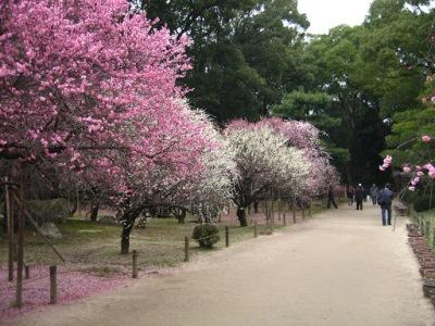 As árvores de sakura e ume