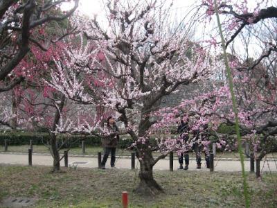 Um jardim cheio de sakuras fica muito próximo ao castelo