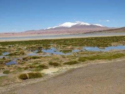 Do outro, um lago azul, muito verde, flamingos rosados e montanhas nevadas