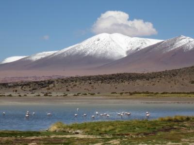 Montanhas nevadas e muitos flamingos